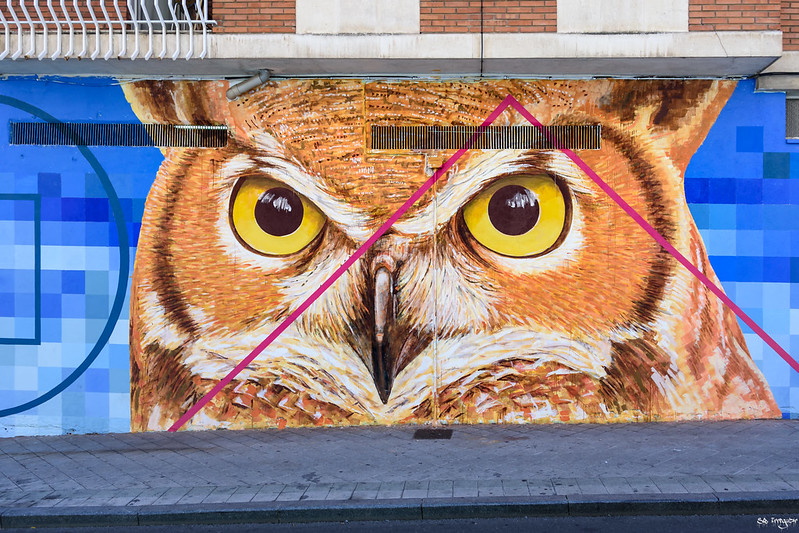 Beautiful owl graffiti